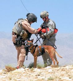 Service dogs and our brave veterans of war.