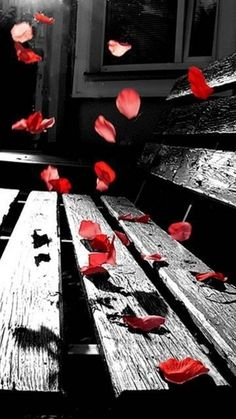 Oh my love is like a red, red rose