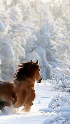 An amazing picture of a Horse in the snow, during Winter