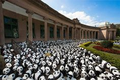 1,600 Papier-Mache Pandas Are Travelling The World | HUH.