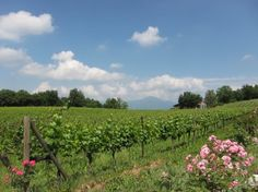 Discover Italian sparkling wine from #Franciacorta.