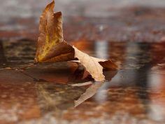 'After the Rain' by Abba Richman Rich Man, Rain, Rain Fall, Waterfall