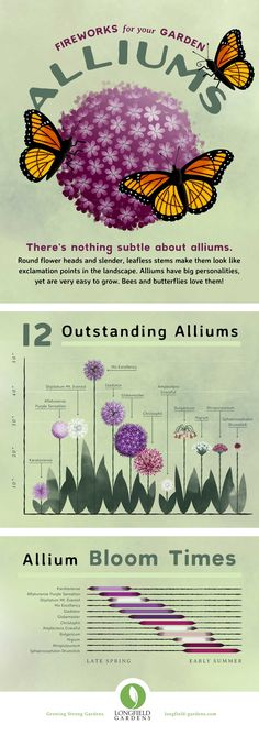 Planning Guide for Alliums