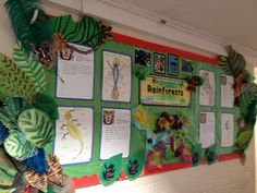 Rainforests Display, classroom displays, class display, jungle, animals, forest, amazon, animal, Early Years (EYFS), KS1& KS2 Primary Teaching Resources