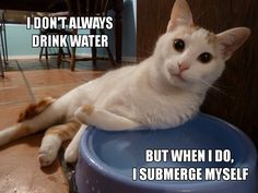 I had a foster that used to sit in the water fountain and drink straight from the spout.  It was adorably annoying.