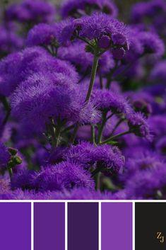 ZJ Colour Palette 215 #colourpalette #colourinspiration