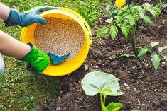 7 Hacks Used By Prize Winning Gardeners To Double Their Tomato Harvest Vegetable Garden Fertilizer, Tomato Fertilizer, Organic Fertilizer, Planting Vegetables, Garden Soil, Garden Care, Growing Vegetables, Growing Tomatoes, Garden Fertilizers
