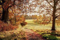 County Kildare Morning - Ireland Print by Barry O Carroll Nature Photos, Fine Art America, Ireland, Nature Photography, Country Roads, Landscape, Prints, Irish, Wildlife Photography