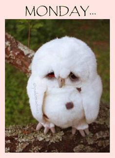 so flyffy...so sad... so monday...  arrrr!!!