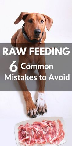 Cat Food Common Raw Feeding Mistakes That Can Be Harmful to Your Pet Raw Dog Food Tips Raw Pet Food, Natural Dog Food, Cat Food, Raw Food For Dogs, Homemade Dog Cookies, Homemade Dog Food, Raw Feeding For Dogs, Dog Nutrition, Raw Food Recipes