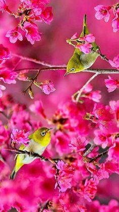 Beautiful Love Images, Beautiful Flowers Wallpapers, Beautiful Roses, Animals Beautiful, Cute Animals, Bird Wallpaper, Nature Wallpaper, Flower Images Free, Spring Scenery