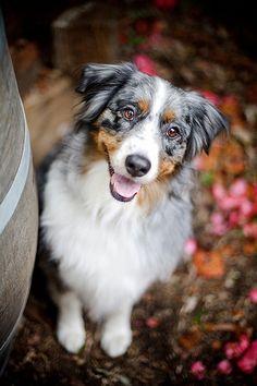 Ruthless Photos - Sydney Dog Photography