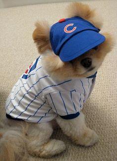 Sporting fan: Boo is a fan of baseball team The Cubs
