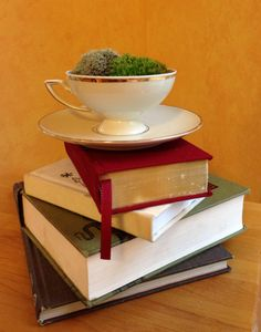 Teacup Terrarium - Live Moss Arrangement in Cup & Saucer.
