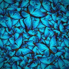 Find Beautiful Background Different Butterflys stock images in HD and millions of other royalty-free stock photos, illustrations and vectors in the Shutterstock collection. Thousands of new, high-quality pictures added every day. Butterfly Background, Butterfly Wallpaper, Butterfly Print, Pink Butterfly, Illustrations, Nature Images, Stock Foto, Beautiful Butterflies, Wall Prints