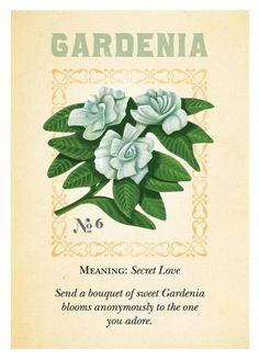 Gardenia meaning / Gardénia symbolique Botanical Flowers, Botanical Art, Diy Garden, Dream Garden, Flower Meanings, Flower Names, Language Of Flowers, Flower Quotes, Vintage Flowers