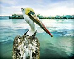 The Pelican Perspective - digital art by Priya Ghose The Pelican Perspective - Fine Art Prints and Posters for Sale priya-ghose.artistwebsites.com