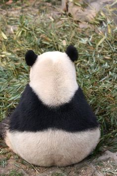 Panda (This is what it looks like to be ignored by a Panda. And you haven't been ignored until you've been ignored by a Panda! Animals And Pets, Baby Animals, Funny Animals, Cute Animals, Animal Memes, Animals Images, Beautiful Creatures, Animals Beautiful, Photo Panda