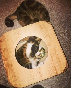 Haha!  that is so cute!  awww I'm so glad they are enjoying the pod and catnip  thank you so much!  #cat #catsofinstagram #cats_of_instagram #catfurnature #catfurniture #catsinboxes #cattoy #INSTACAT_MEOWS #cutecat #PurrMachine #catsinboxes #catbox #Excellent_Cats #BestMeow #dailykittymail #thecatniptimes #catcube #catpod #ArchNemesis #FlyingArchNemesis #myindoorpaws #ififitsisits #cutecatcrew #catchalet #catnip #themeowdaily #kitty #dailykittymail #catgrass