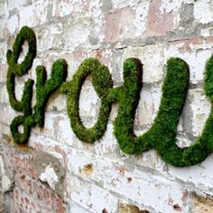 Use Moss Milkshake on the wall!  Wassons Nursery has it!