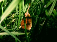 A simple leaf in the grass