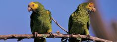 Birds. Bonaire