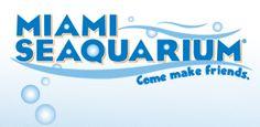 Miami Seaquarium - Great outdoor fun - what kid doesn't love animals (especially sea animals)?