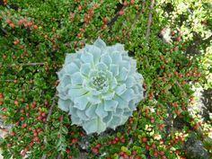Filomena | International Crassulaceae Network