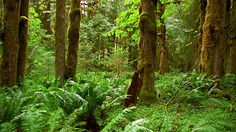 media.gettyimages.com videos medium-shot-pan-plants-and-mosscovered-trees-in-forest-olympic-video-id618-39?s=640x640