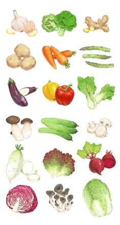 Fruit And Veg, Fruits And Vegetables, Veggies, Watercolor Food, Watercolor Illustration, Vegetable Drawing, Vegetable Painting, Image Fruit, Vegetable Illustration