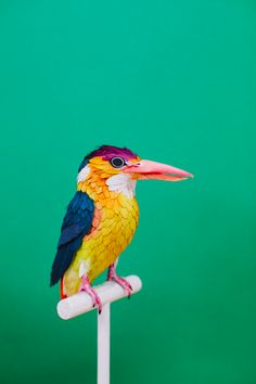 Oriental Dwarf Kingfisher, 2015   Photography: Victoria Holguin and Diana Beltran Herrera With the assistance of: Daniela Romero Franco and Paola Ramirez Quinceno Graphic design: Daniela Romero Franco - Diana Beltran Herrera