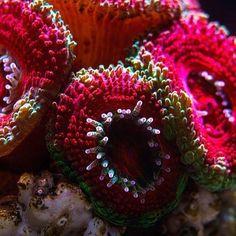 Very cool @twojarafa.pl! #polyplab . Just go: www.polyplab.com . . #coral #reeftank #coralreeftank #reef #reefpack #reef2reef #reefcandy #reefersdaily #reefrEVOLution #coralreef #coraladdict #reefaholiks #reefjunkie #reeflife #instareef  #allmymoneygoestocoral #instareef  #reefpackworldwide #ilovemyreef #rarecorals #reefing #exoticcorals #reefporn #reeferdise #reefers4reefers #coralporn #aquarium #polyplab