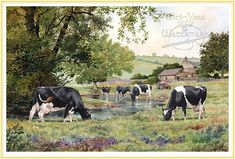 Holstein cows by Anthony Forster - the farmer's artist