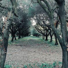 Amo le persone decisequelle che vanno dritte alla meta. La mia meta è la natura dove il mio spirito libero e selvaggio emergere pian piano. Buonanotte.  Edit with @vsco G3  #buonanotte #goodnight #nature #italy #italia #landscape #bestoftheday #amazing #awesome #photo #photoofday #vscocam #vsco #vscoitaly #igers #campania #salerno #followme #seguitemi #sud #tree #vscolandscape #vscogood
