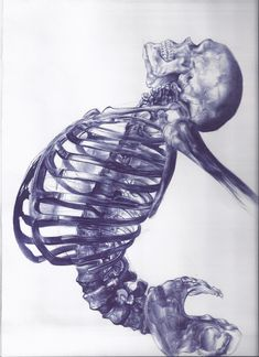 Human skeleton is a ballpoint pen drawing by a young artist Andrea Schillaci from Italy.