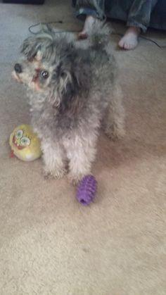 ABC22 Dayton's Dog of the Day - Miles