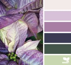 Poinsettia Hues - http://design-seeds.com/index.php/home/entry/poinsettia-hues