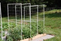 Garden Vegetable Boxes Trellis 37 Ideas - All For Garden Fenced Vegetable Garden, Vegetable Boxes, Raised Garden Beds, Raised Beds, Tomato Trellis, Diy Trellis, Trellis Ideas, Garden Lighting Trees, Small Patio Design