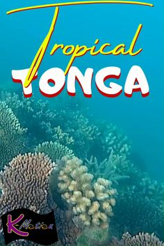 Take a tour of Tropical Tonga above and below the water! #oceania #tropical #tonga #underthesea #budget #budgettravel #travel Travel Deals, Travel Guides, Travel Destinations, Travel Tips, Beautiful Places In The World, Beautiful Places To Visit, Beach Trip, Beach Travel, Best Places To Travel
