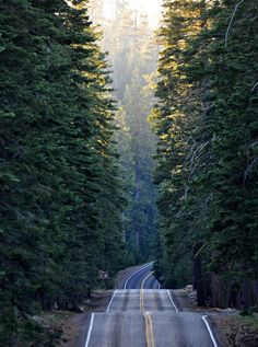 bumpy roads + tall trees