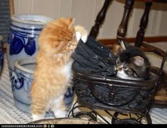 Play hour at cat lady's house: my turn, u push