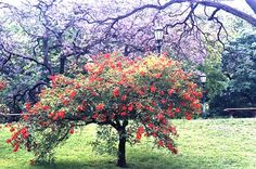 El ceibo y el jacarandá | Al sur del silencio, el poema