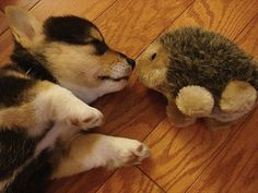 Eskimo kiss!  #DesBookMomGiveaway