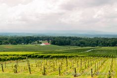 Raffaldini Vineyards growing grapes in Yadkin County (Piedmont region) of North Carolina Piedmont Region, North Carolina Mountains, Growing Grapes, Go Outside, Great Places, Acre, Wines, Traveling By Yourself, Vineyard