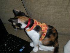 Kitty Harness | Free Pattern