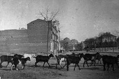 Imágenes del viejo Madrid Paseo del General Martínez Campos, anterior a 1908. Autor desconocido. Museo de Historia (Madrid) Foto Madrid, Old Pictures, Moose Art, The Past, Spain, City, Painting, Animals, Vintage