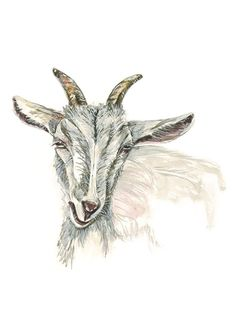 Nuala Connemara, Wildlife Art, Limited Edition Prints, Watercolour Painting, Giclee Print, Fine Art Prints, Moose Art, Antiques, Goat