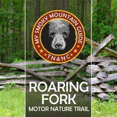 Roaring Fork Motor Nature Trail in Great Smoky Mountains National Park. Less than 5 minutes from downtown Gatlinburg, Tennessee. See historical homes, barns, and maybe, black bears. Smoky Mountain Trails, Smoky Mountains Hiking, Smoky Mountains Tennessee, Smoky Mountain National Park, Great Smoky Mountains, Appalachian Mountains, Smokey Mountain, Appalachian Trail, Gatlinburg Tennessee Cabins