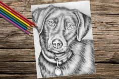 25% OFF SALE Labrador coloring book pages by ArtistrybyLisaMarie