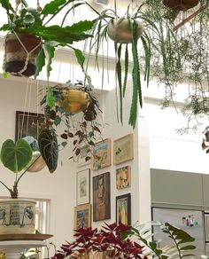 Indoor Garden, Indoor Plants, Home And Garden, Do It Yourself Decoration, Narrow Living Room, Interior And Exterior, Interior Design, Dream Apartment, Aquariums
